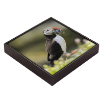 Puffin Framed Tile  ZB_58_FT